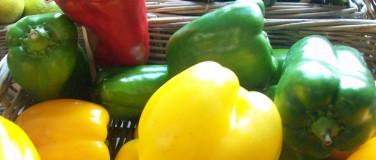 Frugt & Grønt – Økologi